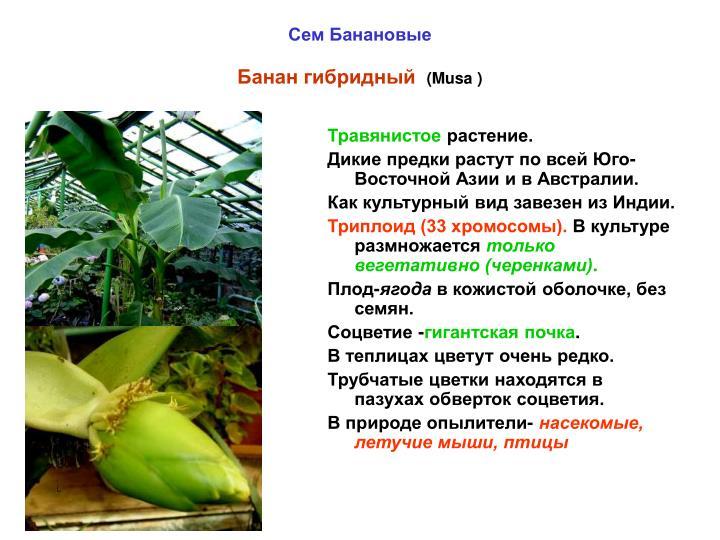 Травянистое