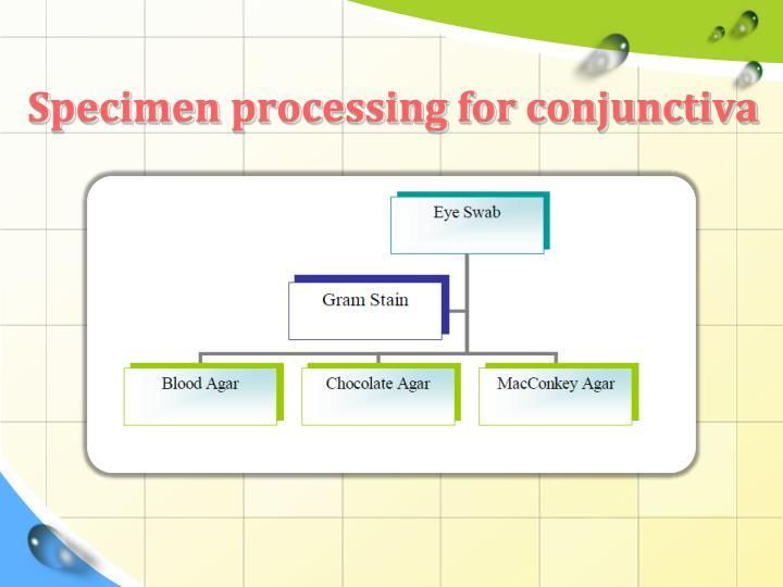 Specimen processing for conjunctiva