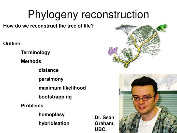 phylogeny reconstruction