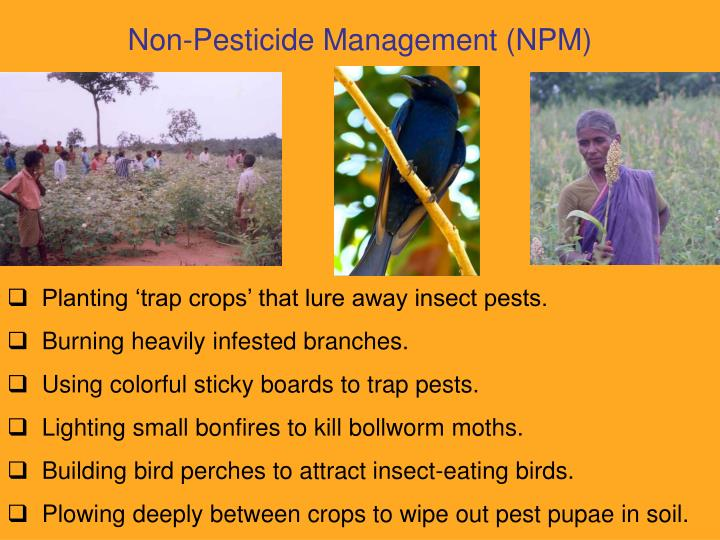 Non-Pesticide Management (NPM)