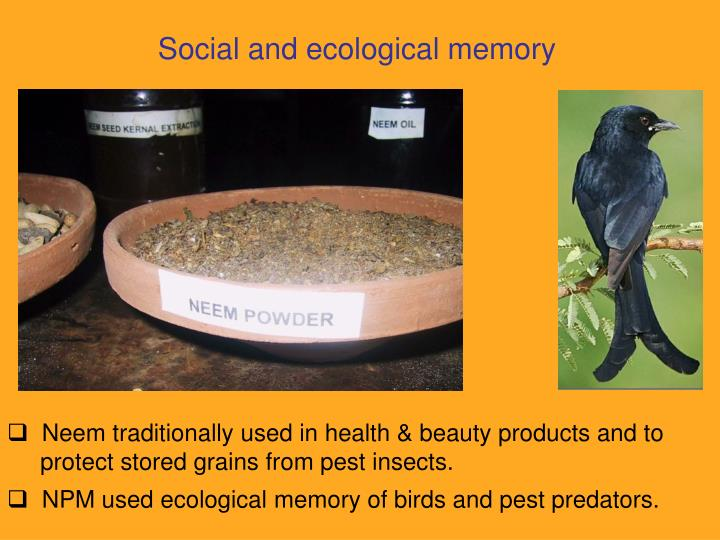 Social and ecological memory