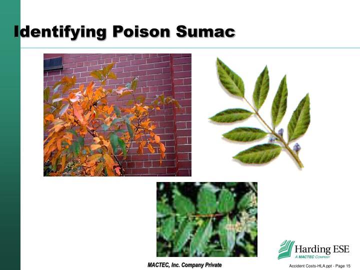 Identifying Poison Sumac