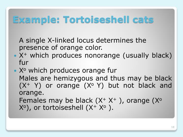 A single X-linked locus determines the presence of orange