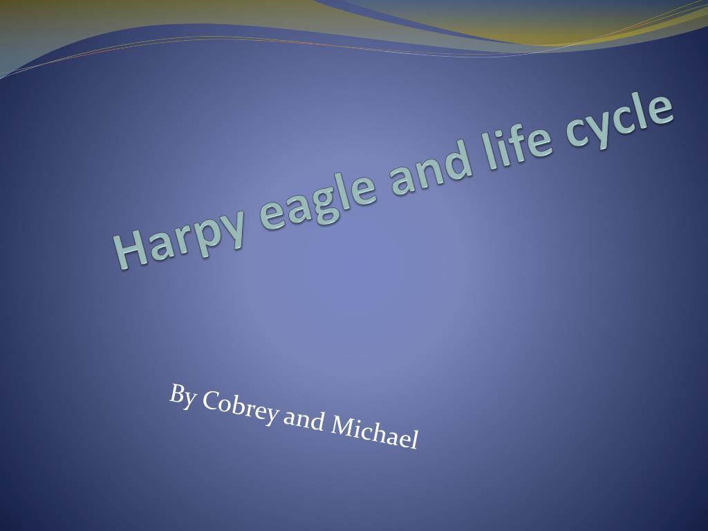 Bald Eagle Tree Snow Wings Ngsversion 1398287939971 Jpg