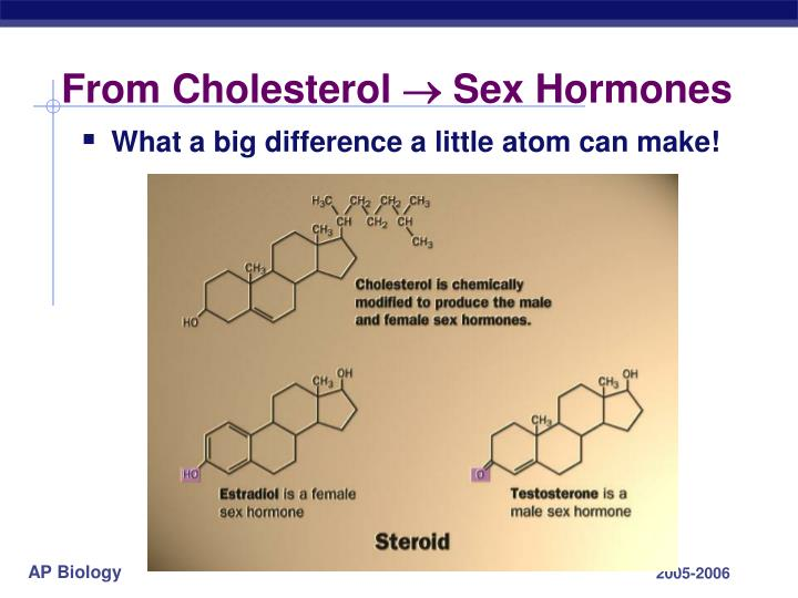 From Cholesterol