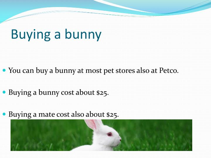 Buying a bunny