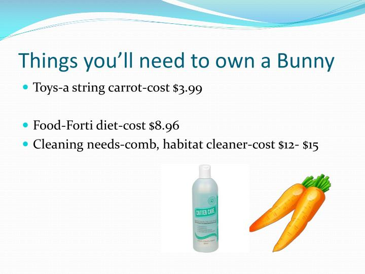 Things you'll need to own a Bunny
