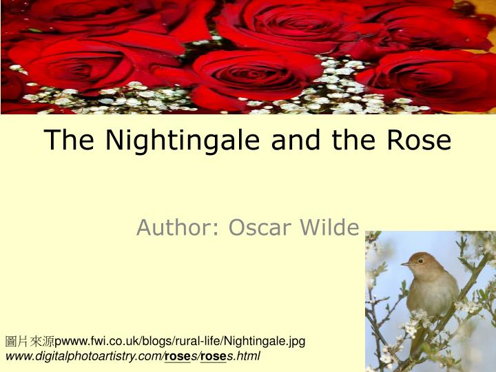 the nightingale and the rose summary A nightingale photographed in offenbach am main, germany in 2007 the nightingale and the rose is a short tragic fantasy story for children by the irish author oscar wilde.