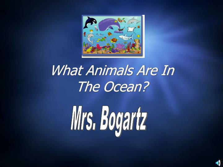 what animals are in the ocean n.