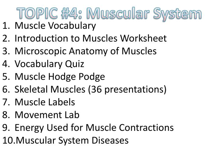 PPT - MUSCULAR SYSTEM PowerPoint Presentation - ID:2761588