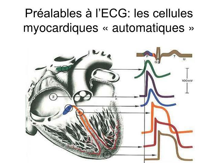 Préalables à l'ECG: les cellules myocardiques «automatiques»