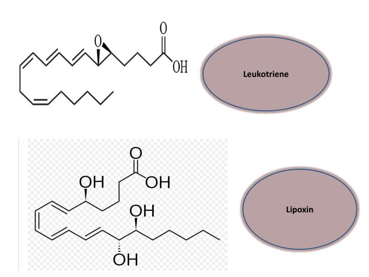 Leukotriene