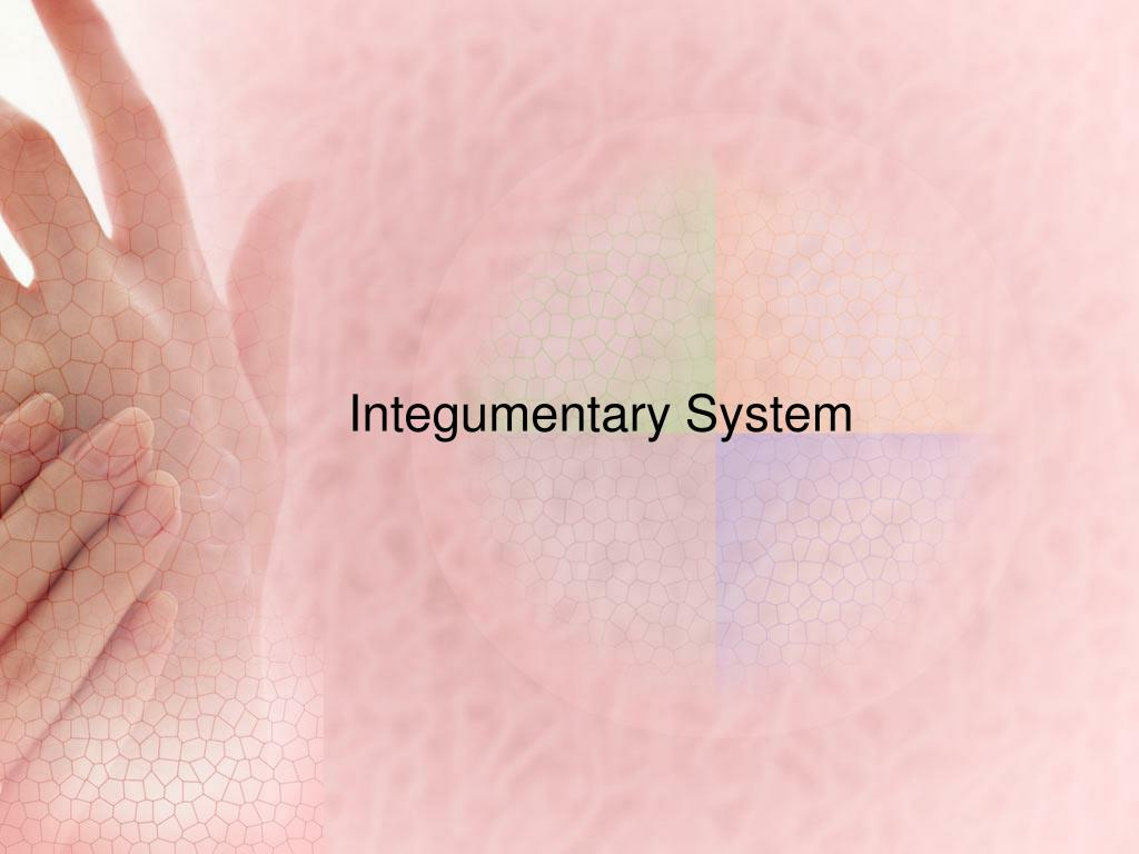 PPT - Integumentary System PowerPoint Presentation - ID:2764517