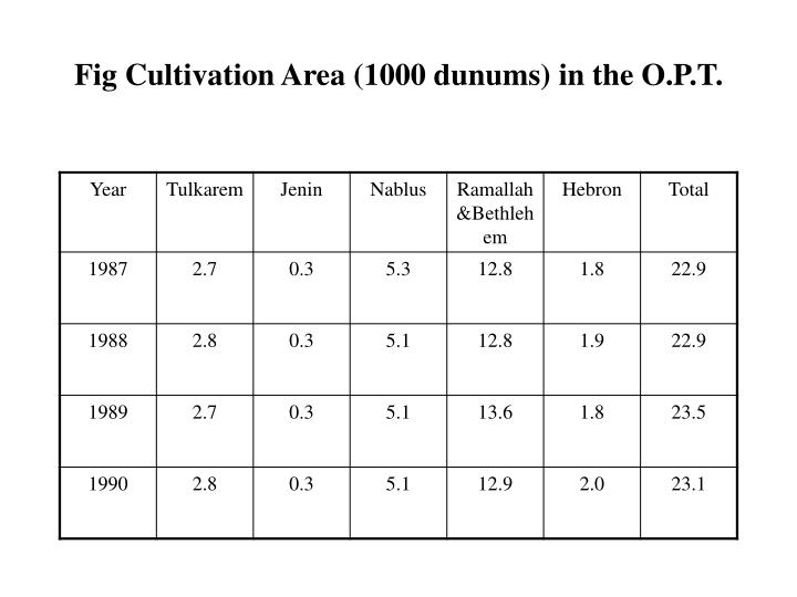 Fig Cultivation Area (1000 dunums) in the O.P.T.