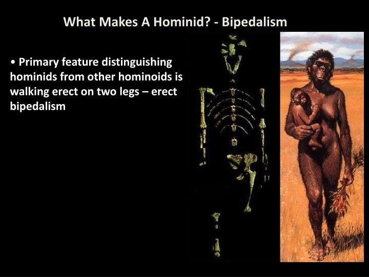 What Makes A Hominid? - Bipedalism