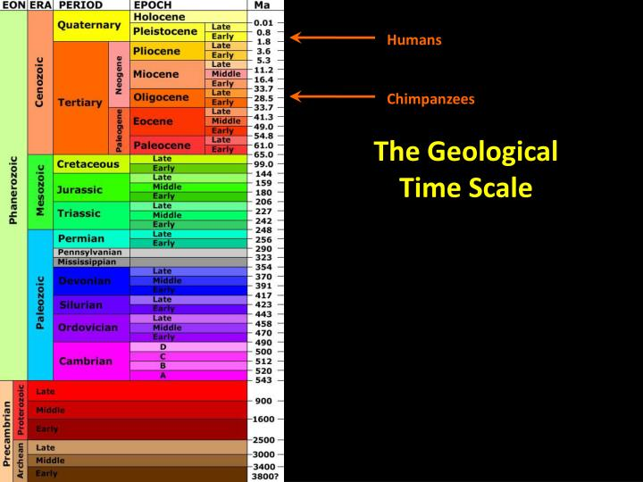 The Geological