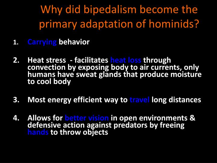 Why did bipedalism become the primary adaptation of hominids?