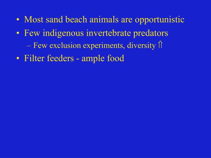 Most sand beach animals are opportunistic