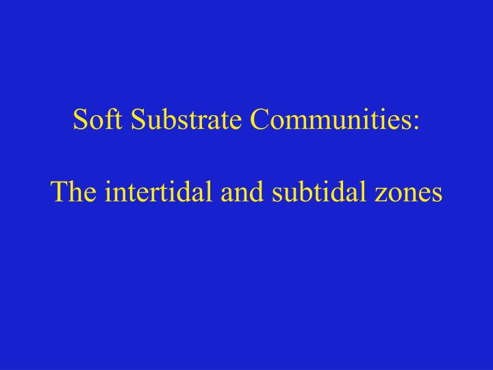 Soft substrate communities the intertidal and subtidal zones