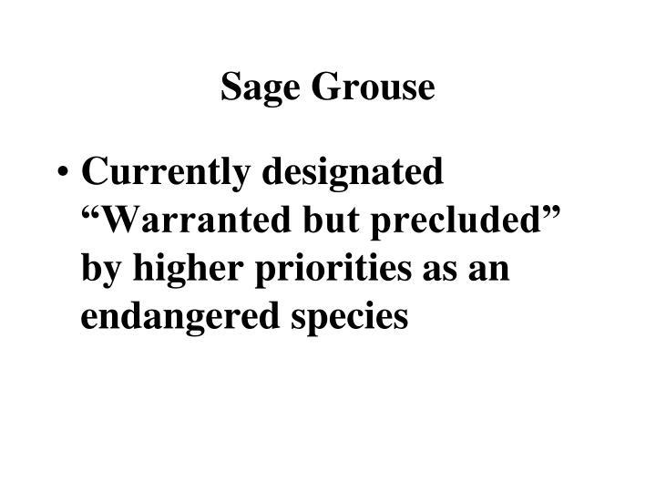 Sage Grouse