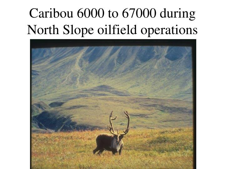 Caribou 6000 to 67000 during North Slope oilfield operations