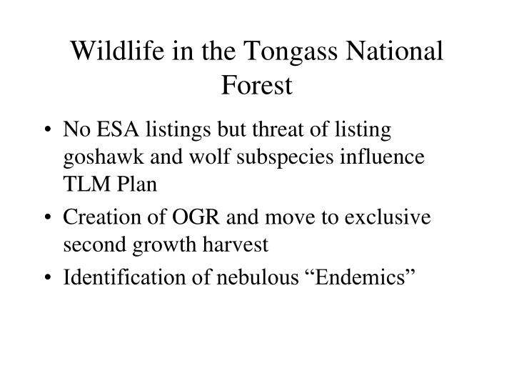 Wildlife in the Tongass National Forest