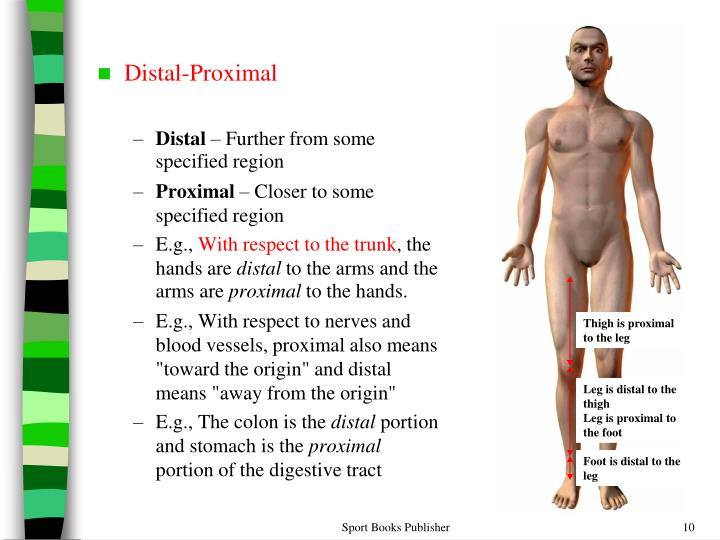 Dorable Definition Of Proximal In Anatomy Mold - Image of internal ...