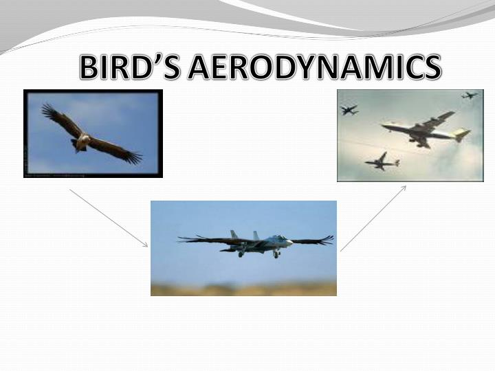 Bird s aerodynamics