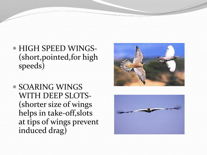 HIGH SPEED WINGS-(