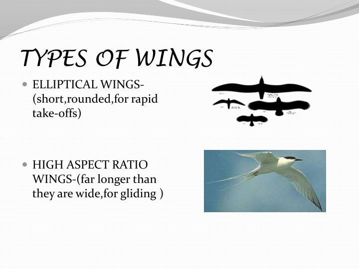 TYPES OF WINGS
