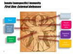innate nonspecific immunity first line external defenses