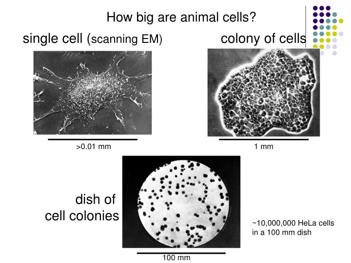 single cell (