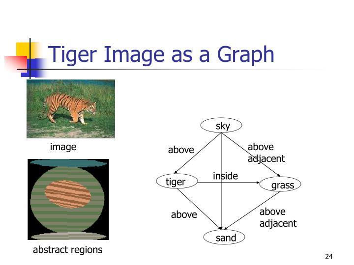 Tiger Image as a Graph