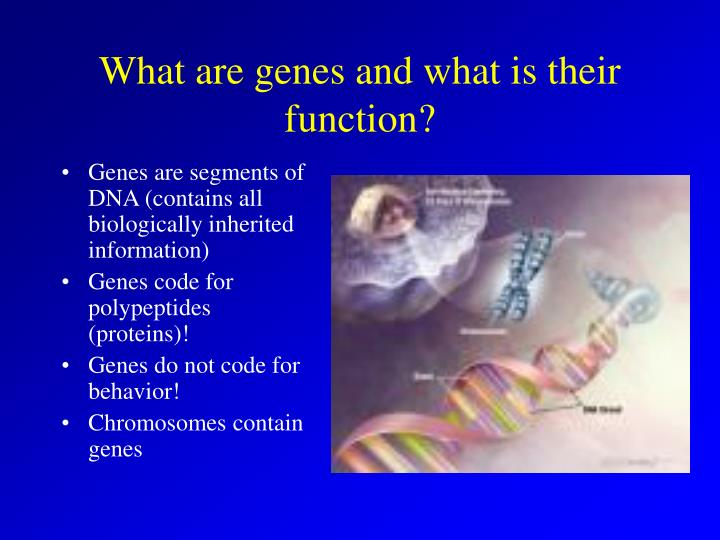 What are genes and what is their function