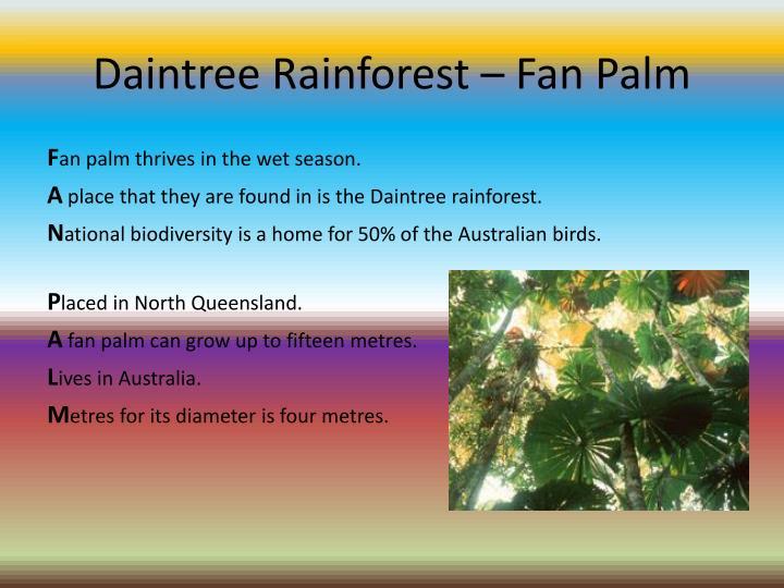 Daintree Rainforest – Fan Palm