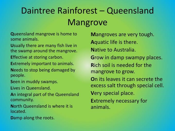 Daintree Rainforest – Queensland Mangrove