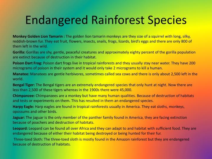 Endangered Rainforest Species