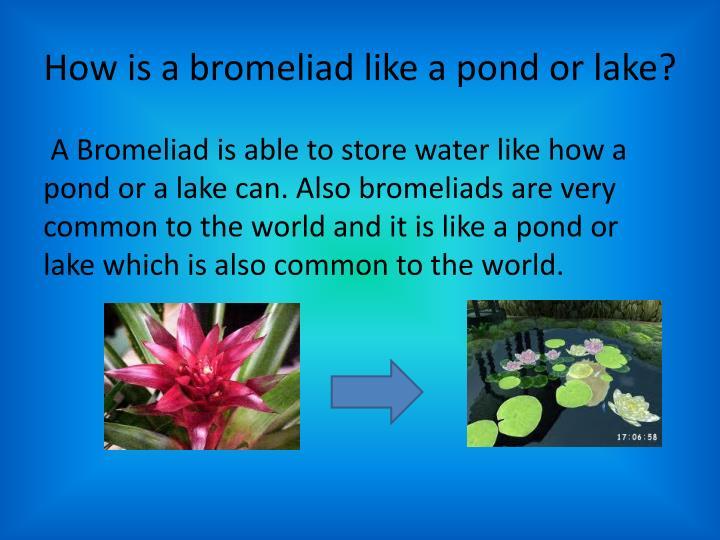 How is a bromeliad like a pond or lake?