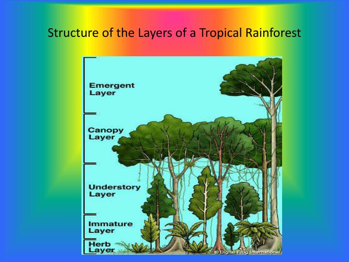 Structure of the Layers of a Tropical Rainforest