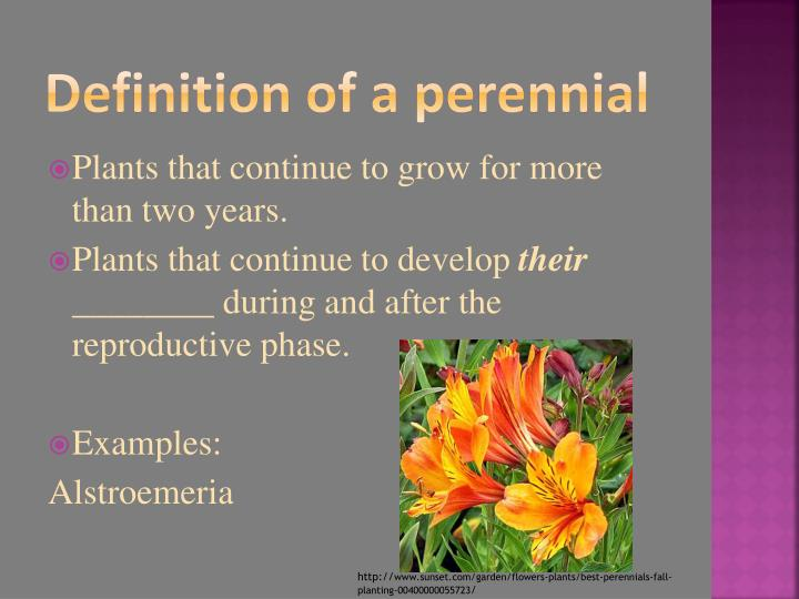 Definition of a perennial
