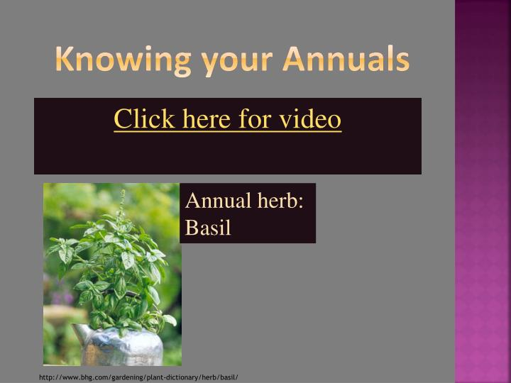 Knowing your Annuals