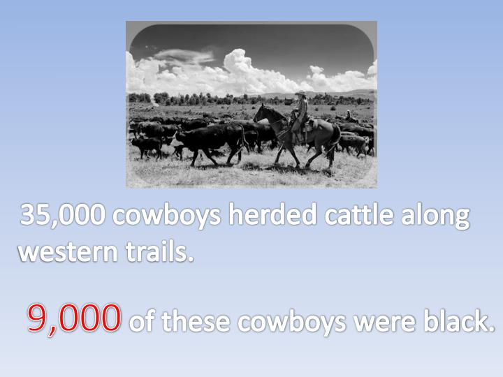35,000 cowboys herded cattle along