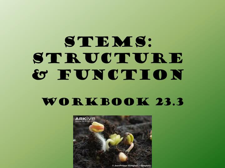 Stems structure function