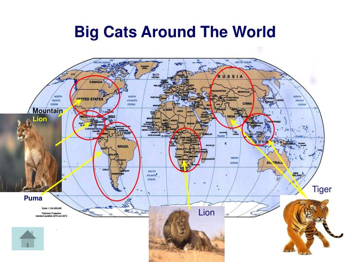 Cat Map Of The World.Ppt Cat Map Powerpoint Presentation Id 2772993