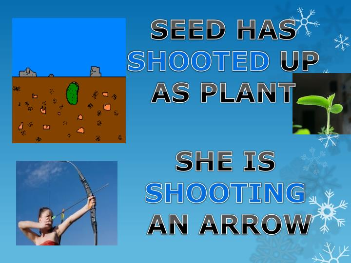 SEED HAS