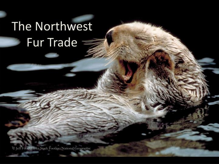 the northwest fur trade n.