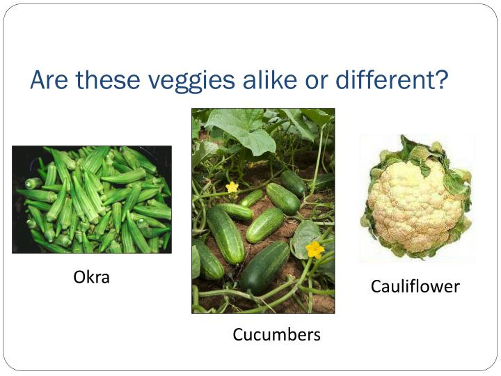 Are these veggies alike or different?
