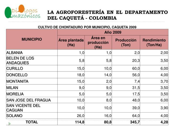 LA AGROFORESTERÍA EN EL DEPARTAMENTO DEL CAQUETÁ - COLOMBIA