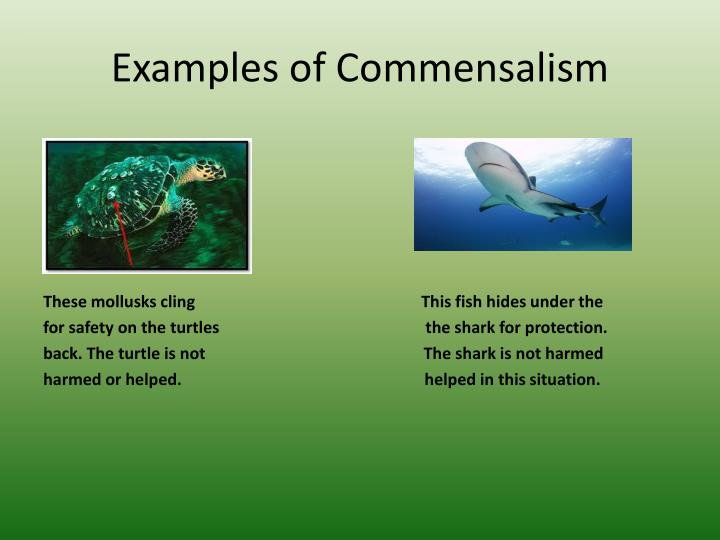 PPT - Organisms Interactions PowerPoint Presentation - ID:2776861