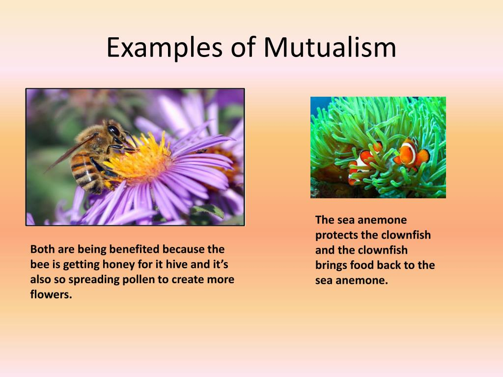 PPT - Organisms Interactions PowerPoint Presentation - ID